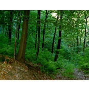 ОНФ в Калужской области принял участие в конференции по проблемам экологии и защиты леса