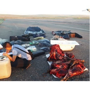 В Туве при силовой поддержке бойцов СОБР задержаны браконьеры