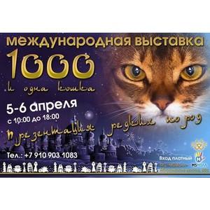 Шоу в «М5 Молл»: «Тысяча и одна кошка»!