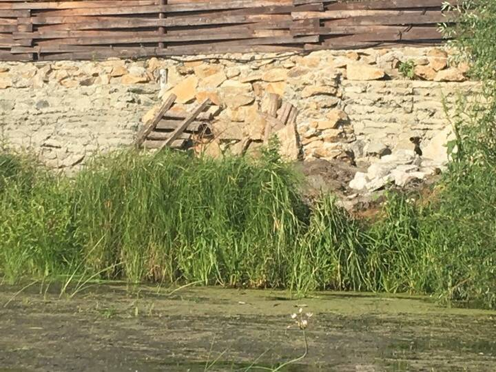 Активисты ОНФ в Челябинской области обнаружили места слива нечистот в реку Миасс