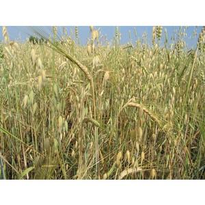 Зерно хранили в нарушение закона