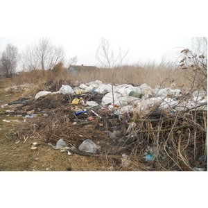 За отчётный период в Ярославской области зарегистрировано 50 вспышек заразных болезней животных