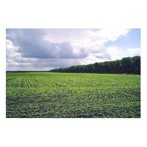 Об участии Томского Управления Россельхознадзора в первом региональном Агрономическом собрании