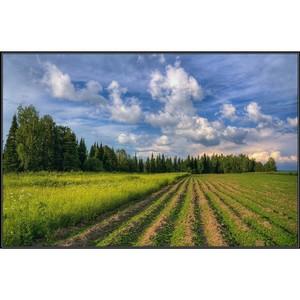 О рекультивации земельных участков: понятие, этапы, ответственность.