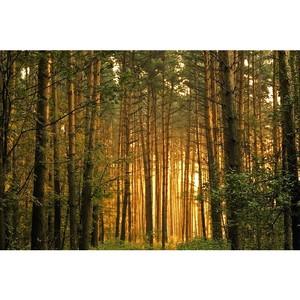 Активистам ОНФ удалось спасти от уничтожения сотни гектаров лесов Иркутска