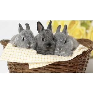 О кролиководстве