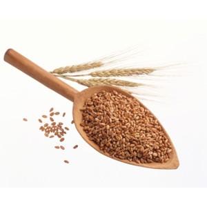 Неконтролируемое применение сельхозпроизводителями пестицидов приводит к их накоплению в почве
