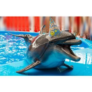 В Сочи отметят день рождения дельфина - заслуженного артиста