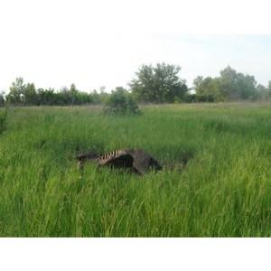 Активисты ОНФ Волгограда просят комитет ветеринарии разобраться с падежом скота на о. Сарпинский
