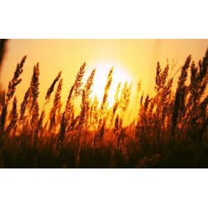 Выявлены нарушения при хранении зерна