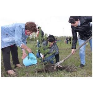 659 тыс. деревьев высадили кузбассовцы в рамках Всероссийского дня посадки леса