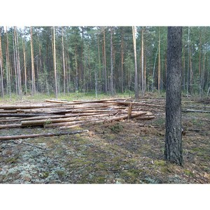 ОНФ взял на контроль ситуацию с санитарными рубками в Шегарском районе Томской области