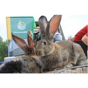 В Белгородской области выбрали самого крупного кролика