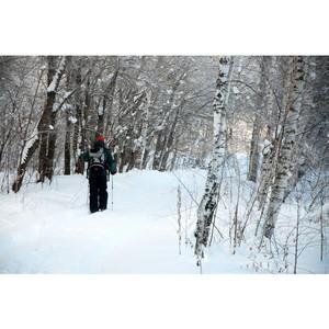 Пять заблудившихся вывели из леса спасатели Московской области во время новогодних праздников