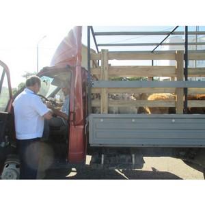 О незаконной перевозке овец