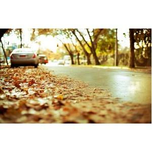 Готовь сани осенью
