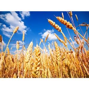 Об исследовании семян льна масличного испытательной лабораторией Омского филиала