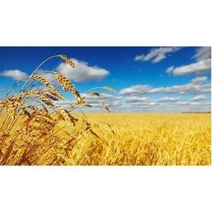 По полям Ростовской области…