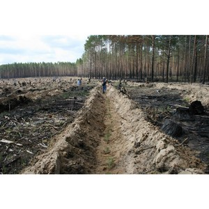 Томская таможня на страже лесных богатств региона