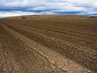 Выявляются загрязненные опасными токсикантами земельные участки