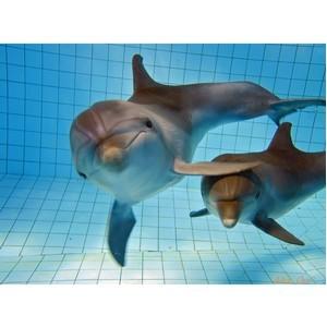 Премьерный благотворительный показ нового шоу в дельфинарии г. Набережные Челны!