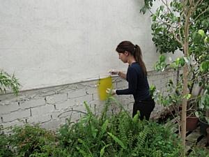 О мониторинге карантинных вредителей с использованием феромонных ловушек в Волгоградской области
