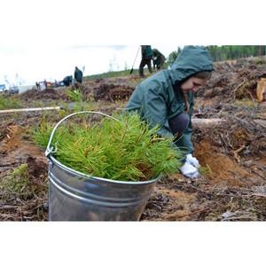 LafargeHolcim приняла участие во Всероссийском дне посадки леса