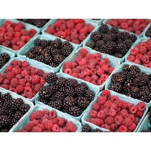 Зараженные ягоды ежевики и малины уничтожены