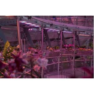 Флорариум парка Зарядье освещается светильниками ТМ «АтомСвет»