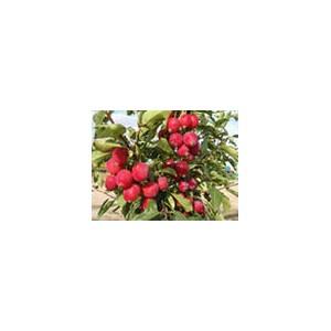 Россельхознадзор разрешил ввоз в Россию яблок из Республики Молдова