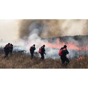 Активисты ОНФ в Амурской области и МЧС продолжают работу по профилактике природных пожаров