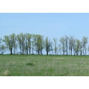 Больше 40 гектаров сельхозземель в Городищенском  районе зарастает сорняками и деревьями