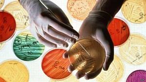 Микробиологический контроль готовых изделий с кремом