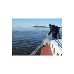 Рыбоводам Дона помогут улучшить эпизоотическую ситуацию и усилить импортозамещение рыбной продукции