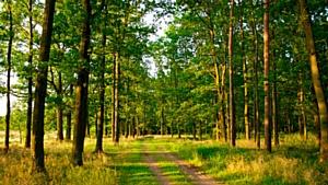 Кировское отделение ОНФ приступает к работе по созданию в регионе «зеленых щитов»