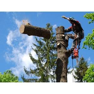 Кронирование деревьев: виды кронирования