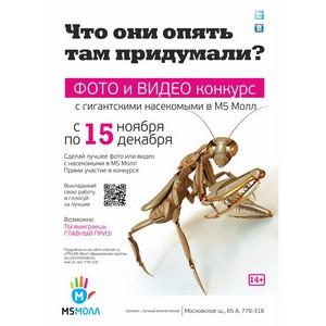 Конкурс в «М5 Молл»: гигантские букашки и забавные мордашки!
