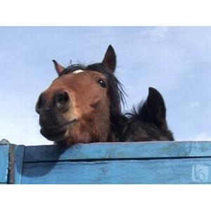 О задержании партии лошадей