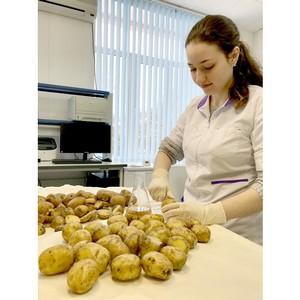 Распространение заболеваний картофеля и их предупреждение