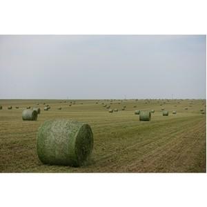 В 2015 году Россельхозбанк предоставил клиентам на проведение сезонных полевых работ 108 млрд руб