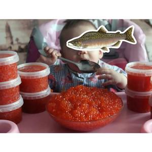 Икрой с горбушей накормят сельских малышей