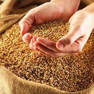 Об итогах Управления Россельхознадзора по надзору в области семеноводства