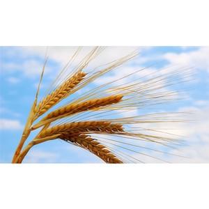 Челябинский филиал Россельхозбанка готов к финансированию посевной кампании