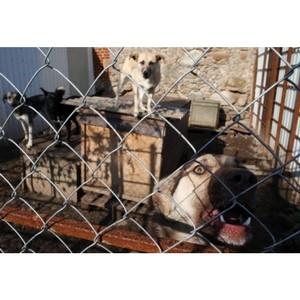 Активисты ОНФ добились отмены сомнительной закупки на отлов и содержание бездомных животных в Ишиме