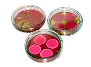 Высококачественные хромогенные питательные среды
