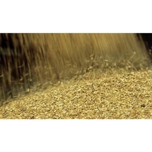 О выпуске в обращение зерна без декларации