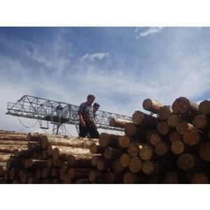 48909 кубических метров лесоматериалов вывезено из Томской области