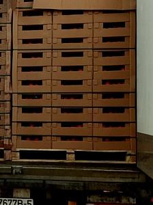 Смоленские таможенники пресекли  ввоз из Белоруссии в Россию 40 тонн турецких томатов