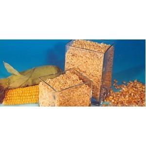 Об исследовании специалистами Ростовского филиала ФГБУ «ЦОКЗ» корма кукурузного