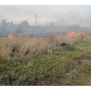 """Ёксперты ќЌ' сообщили руководству """"ел¤бинской области о занижении статистики площадей лесных пожаров"""